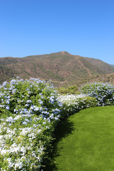 Just beautifull with astro turf and plumbago bushes